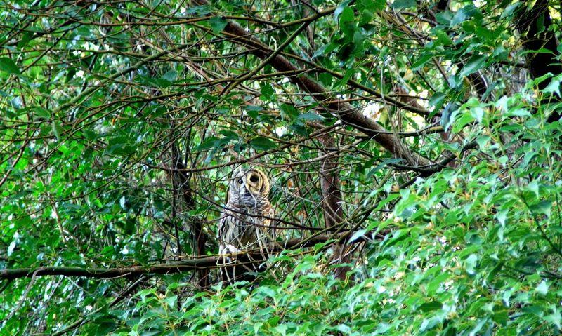 Owl1 12-9-2012 8-28-25 AM 2036x1230