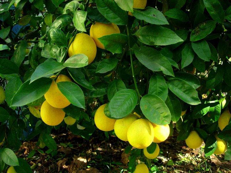OurLemons