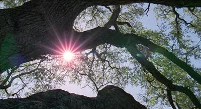 Week11-tree-of-life-tree
