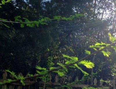 CypressBranch