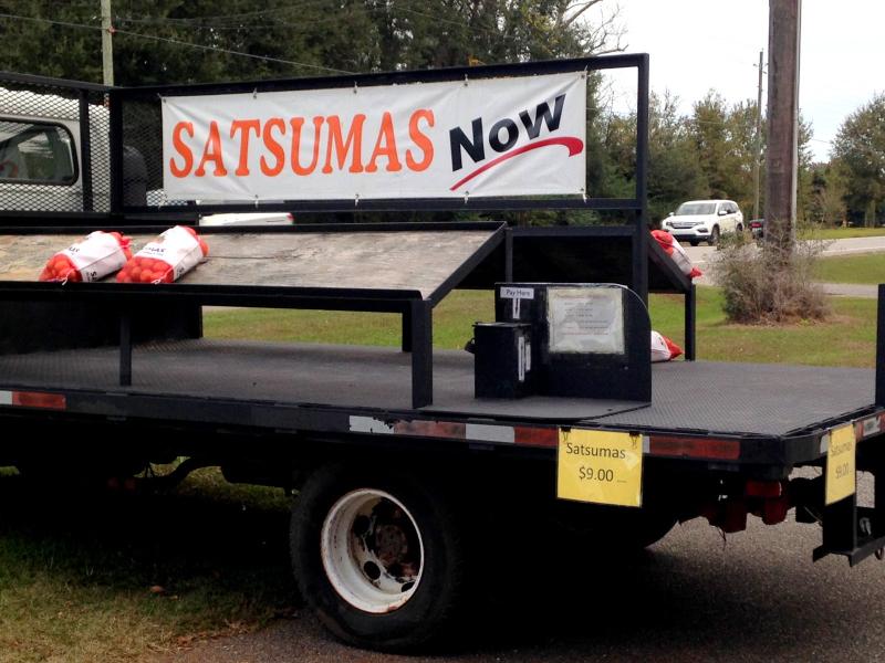SatsumasNow